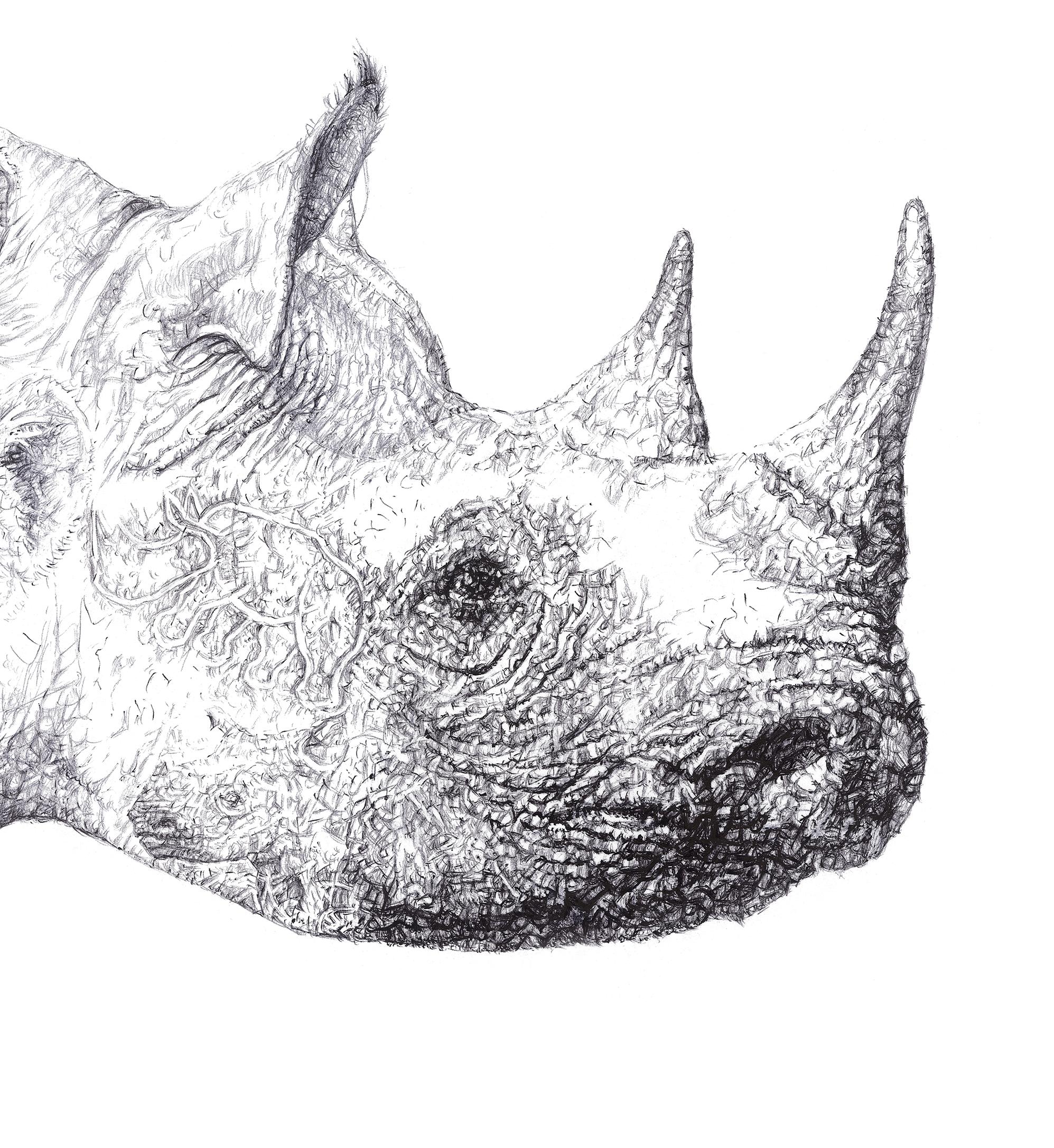 Drawn rhino face 'Rhino McCracken species Endangered detail