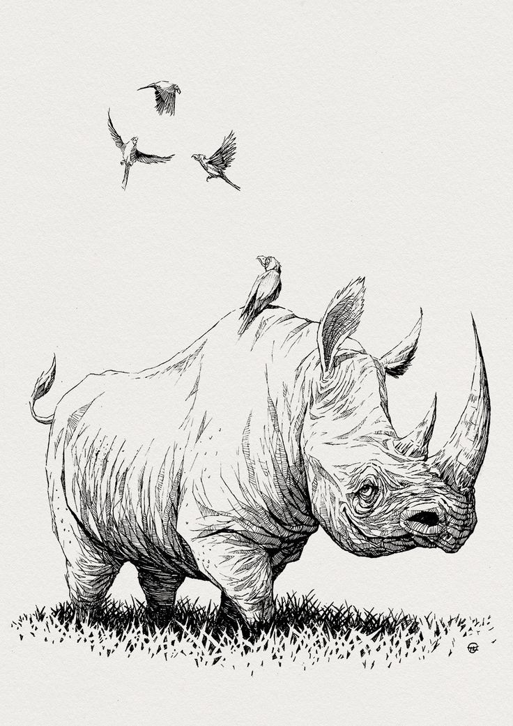 Drawn rhino famous Rhino 607 Larek LOVE best