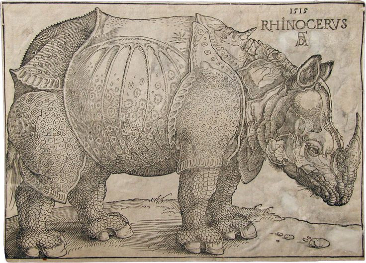 Drawn rhino famous 1000+ Albrecht about on Dürer