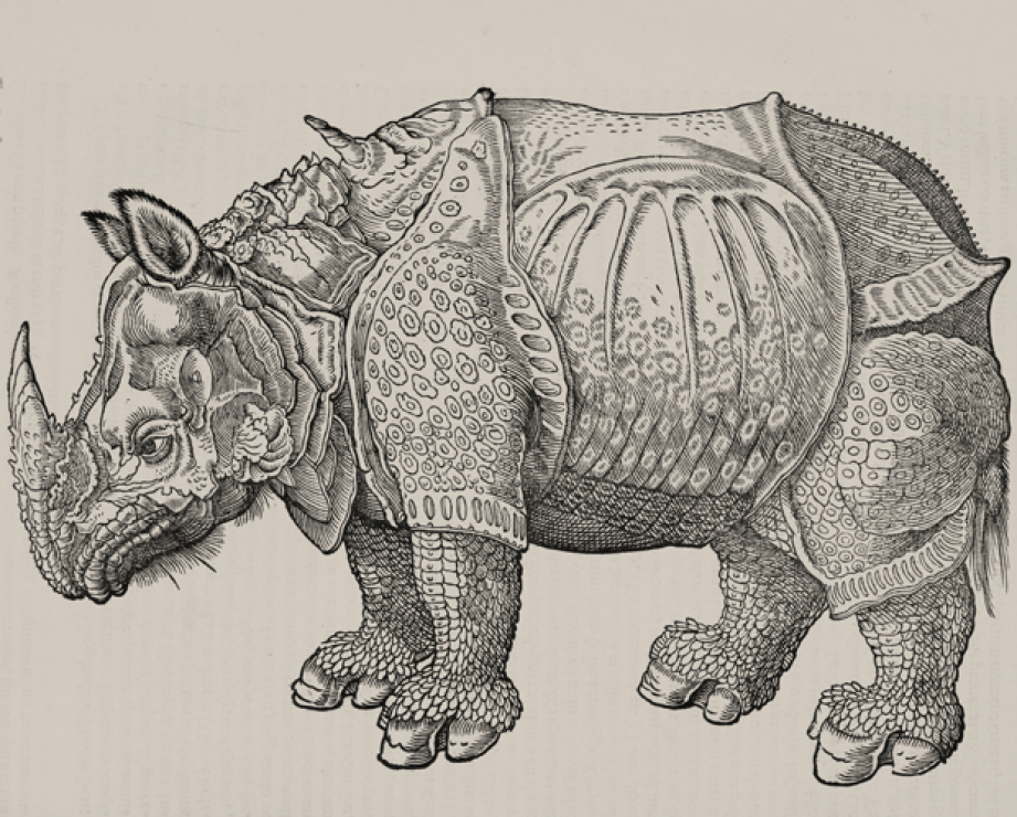Drawn rhino famous 6 Incorrectly Portrayed Taxonomic in
