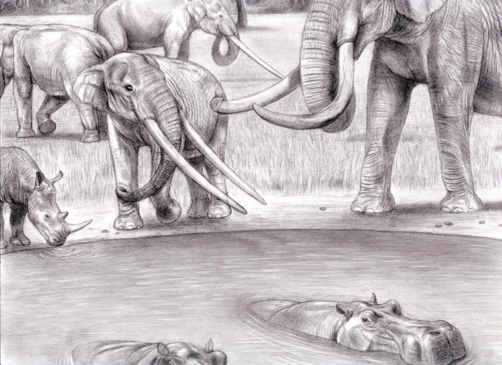 Drawn rhino hippo Mastodont Mastodont European Auvergne by