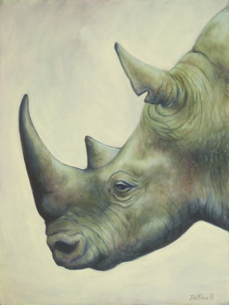 Drawn rhino hippo Best Pin Hippos this Rhinos
