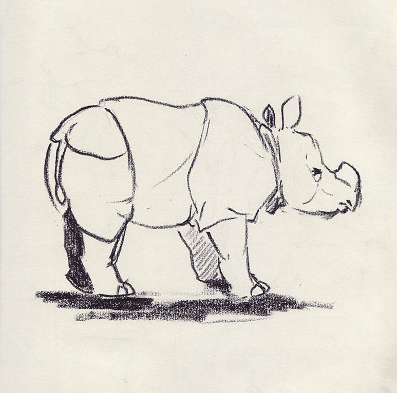 Drawn rhino horn rhino  Horned September 2… from