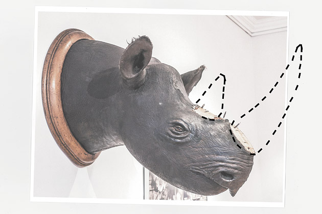 Drawn rhino horn rhino  Bloomberg Theft Irish Rhino