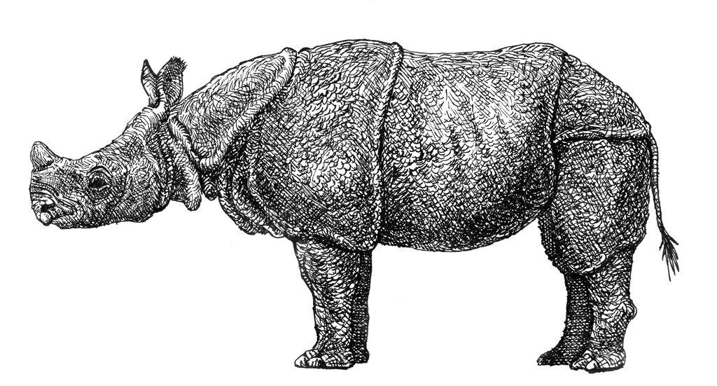 Drawn rhino javan rhino By Javan Javan rhinoceros rhinoceros