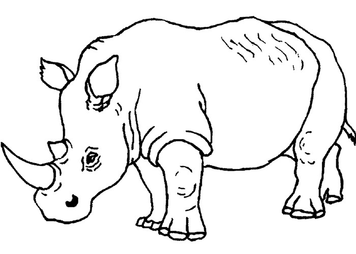 Drawn rhino jungle animal Template Wild Template Templates Animal