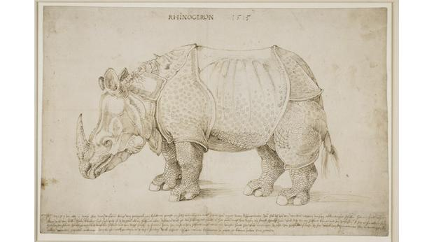Drawn rhino mean A 1515 of History Trustees