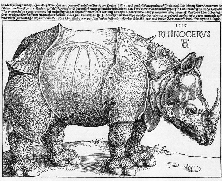 Drawn rhino medieval animal On best engraving Albrecht woodcut