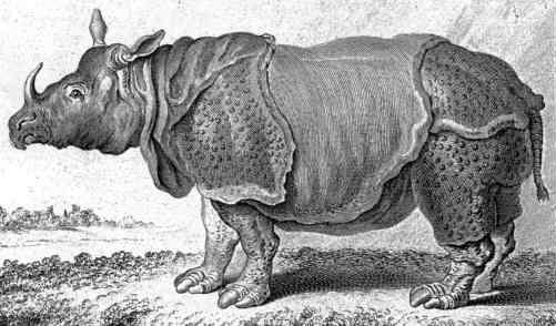 Drawn rhino medieval animal Buffon's Dürer's rhinocerus rhinocerus