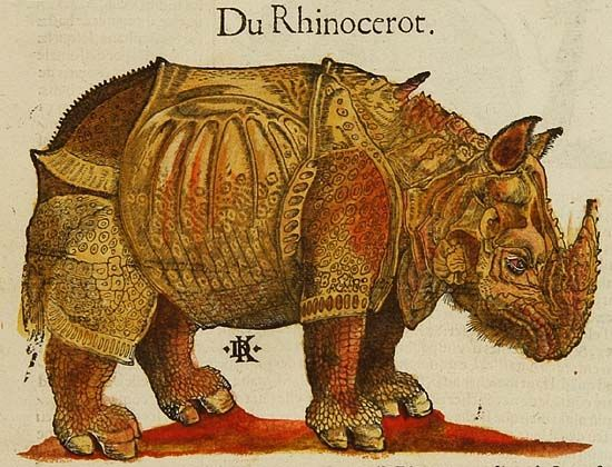 Drawn rhino medieval animal Best of the The in