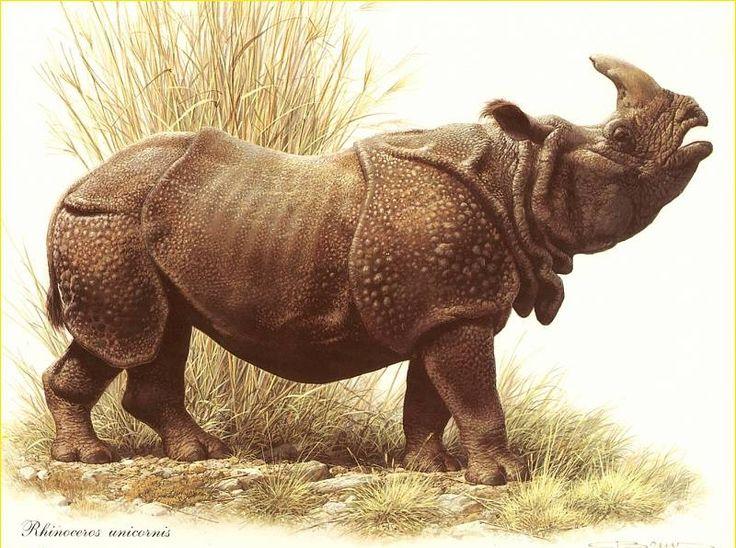 Drawn rhino medieval animal Indian White Pinterest 56 best