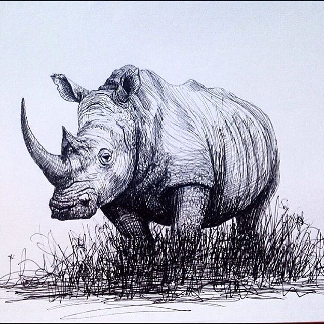 Drawn rhino pencil drawing # drawings sketchbook in #artist