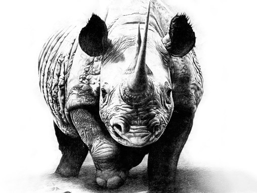 Drawn rhino pencil drawing Rhino Pencil tattoos Rhino Pencil