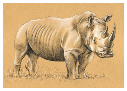 Drawn rhino africa A Step 3 Drawing How