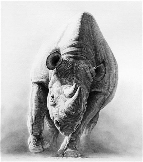 Drawn rhino pencil drawing Pinterest Rhinos drawing rhino Search