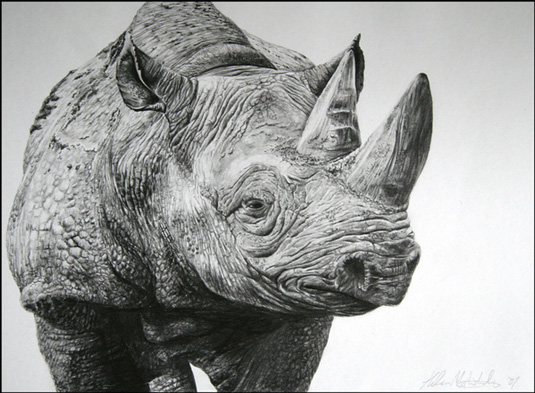 Drawn rhino pencil drawing Our mindsThis was amount McNicholas