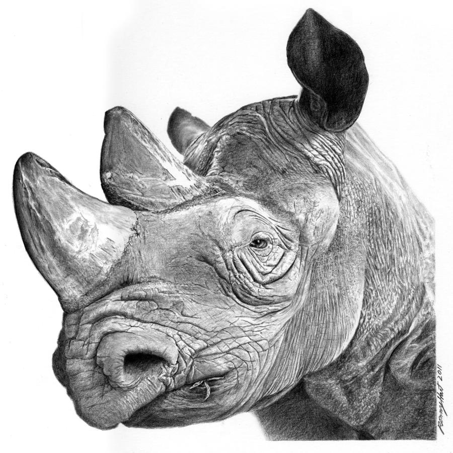 Drawn rhino pencil drawing Ronny Hart DrawingsPencil The /