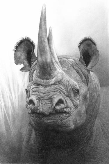 Drawn rhino pencil drawing Rhinoceros and ideas Art Art