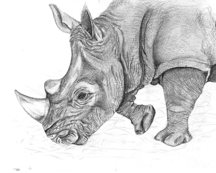 Drawn rhino pencil drawing DeviantArt Drawing Rhino carriephlyons Drawing