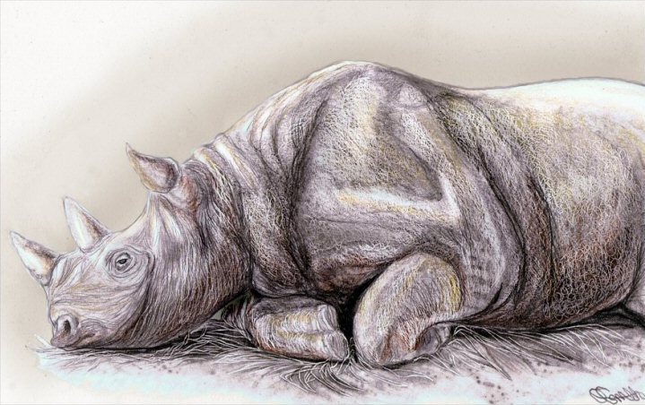 Drawn rhino pencil drawing INCREDIBLY REALISTIC PENCIL pencil a