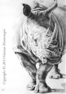 Drawn rhino realistic Montenegro Vanessa Drawing Manga Westchase