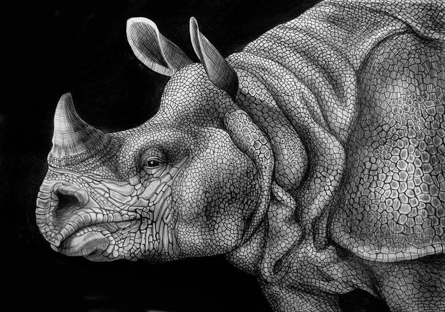 Drawn rhino realistic Pen Tim Realistic Tim Creative: