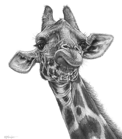Drawn rhino realistic Pencil Detailed face REALISTIC AND