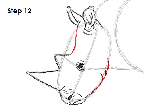 Drawn rhino rhino head A How Draw Rhinoceros 12