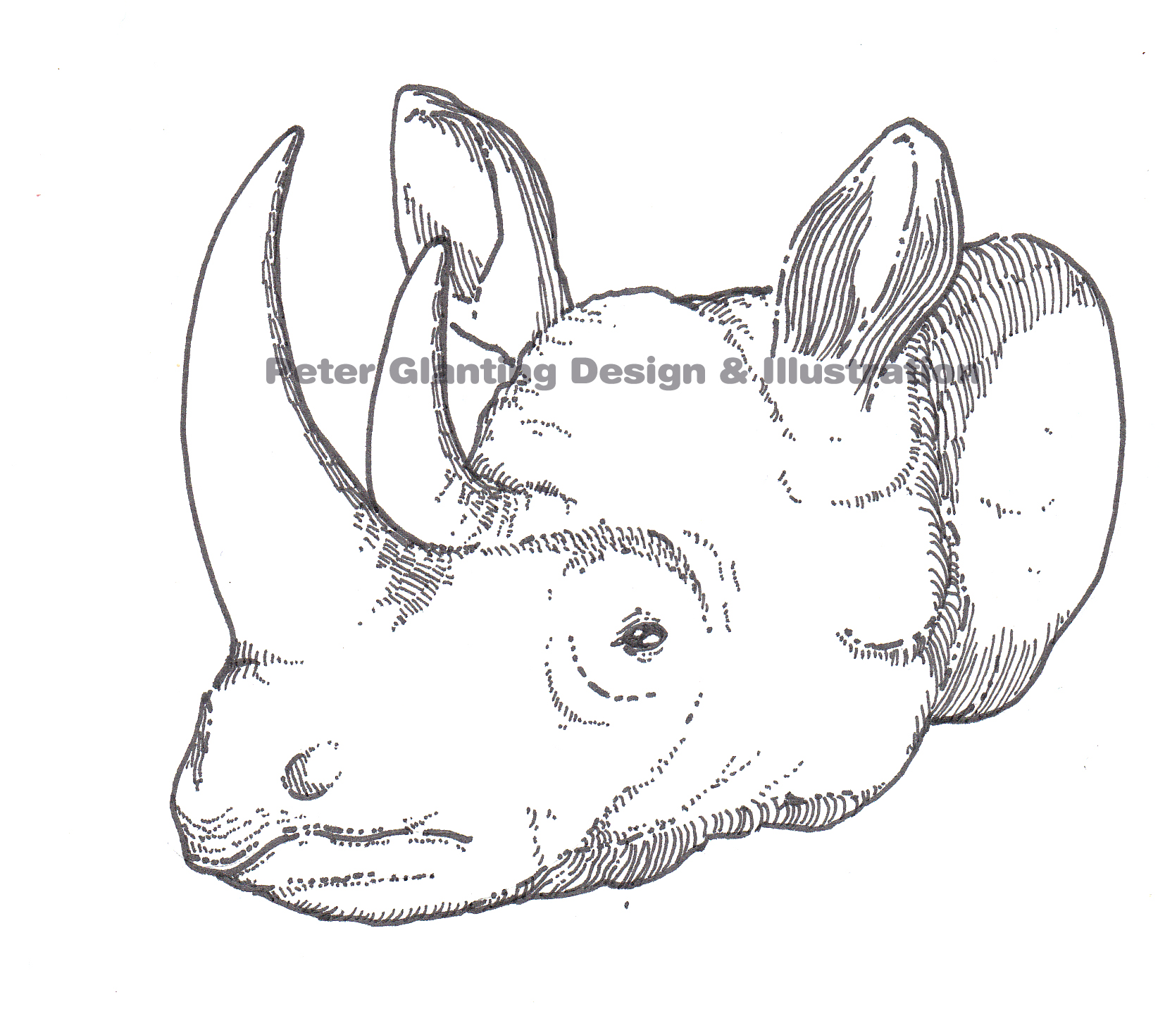 Drawn rhino rhino head Peteglantingdraws head rhino Posted
