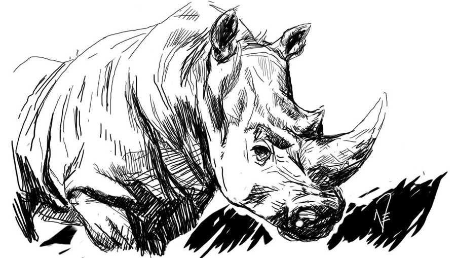 Drawn rhino rhino head On by DeviantArt payprchs head