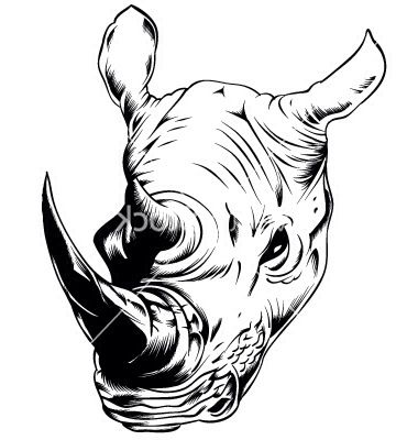 Drawn rhino rhino head On best images Pinterest 330