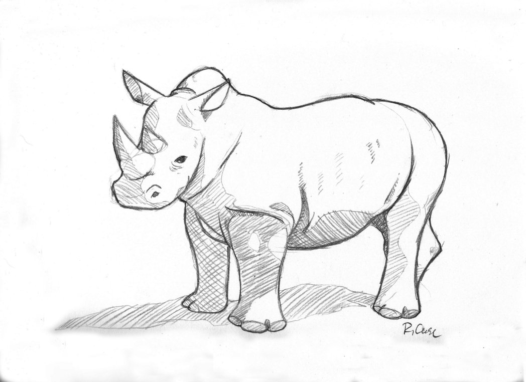 Drawn rhino sketch Sketch Rhino Rhino rongs1234 rongs1234