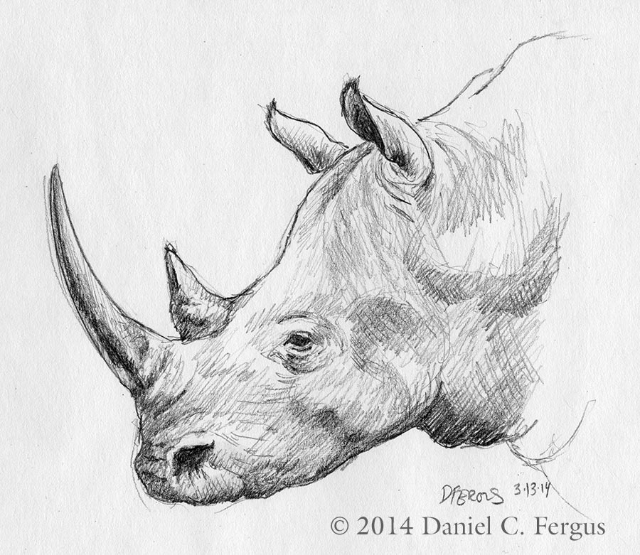 Drawn rhino sketch Sketches rhino rhino  Search
