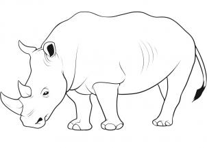 Drawn rhino sketch Animals step how rhino Rhino