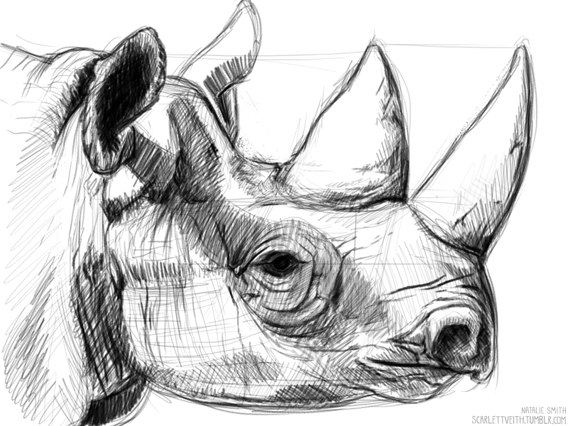 Drawn rhino sketch Rhino Rhino draw rhino by