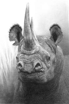Drawn rhino sketch Sketch rhino and Extinct Rhino
