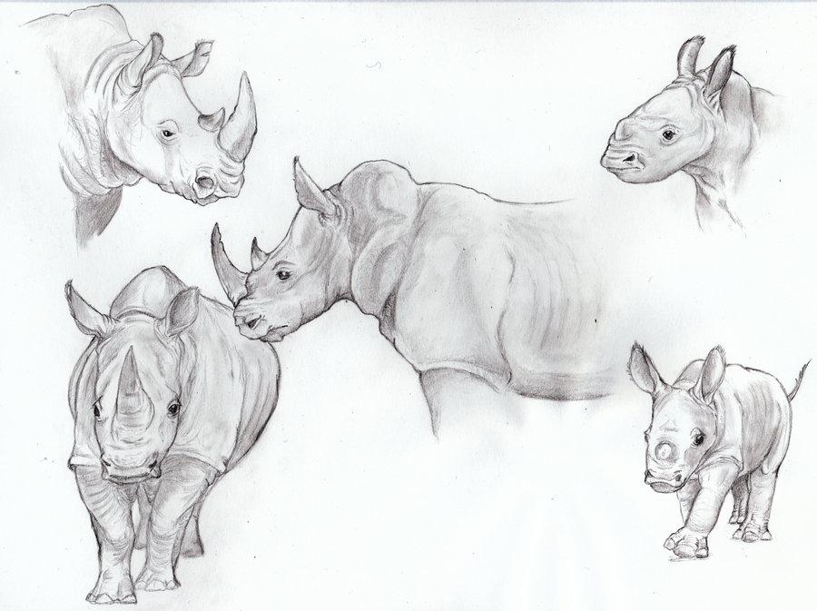 Drawn rhino white rhino White by Rhino White Eurwentala