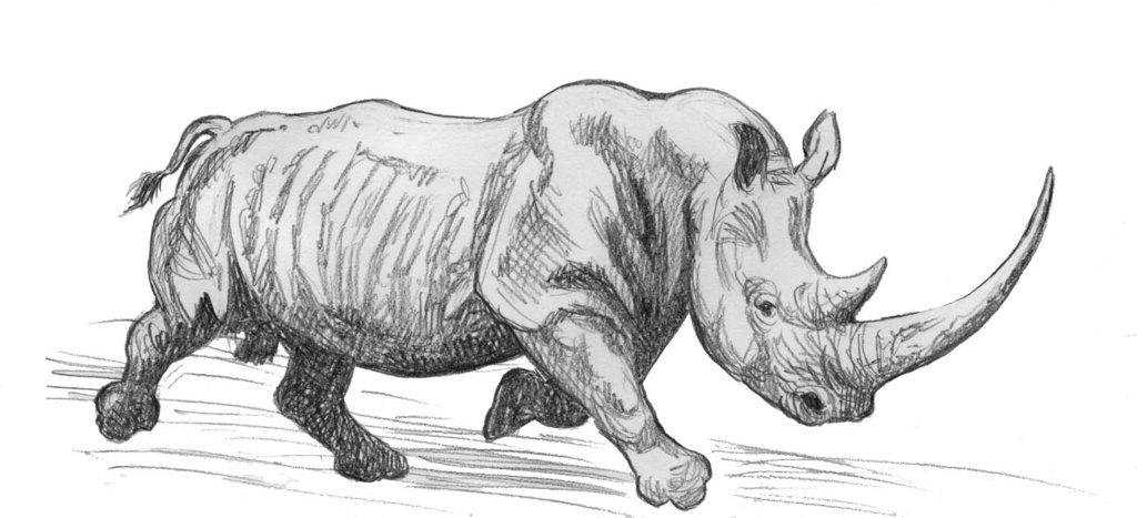 Drawn rhino white rhino On Charging White White WillemSvdMerwe