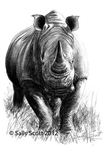 Drawn rhino white rhino White Pinboard rhino Drawing crop