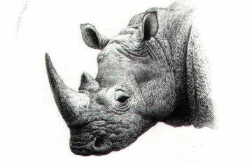 Drawn rhino white rhino Black White Trust About rhino