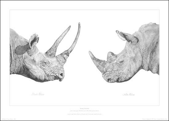 Drawn rhino white rhino Hartree pencil