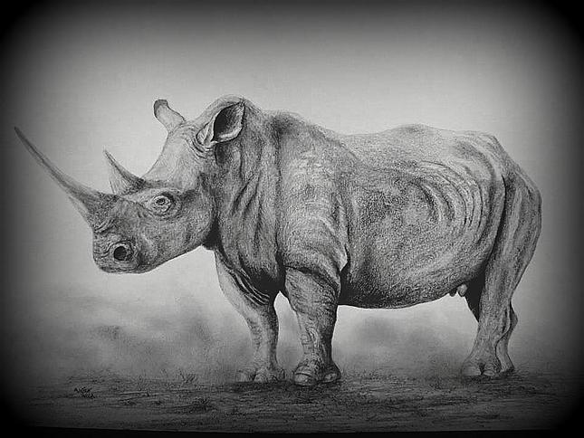 Drawn rhino white rhino Happy Share Gift for This: