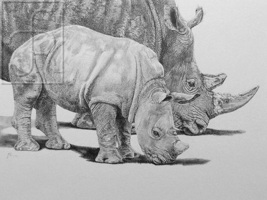 Drawn rhino white rhino Pe… white ' mother and