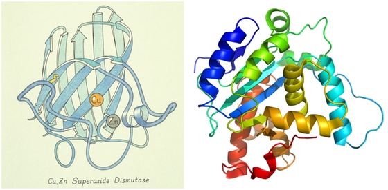 Drawn ribbon protein For Visual A  Language