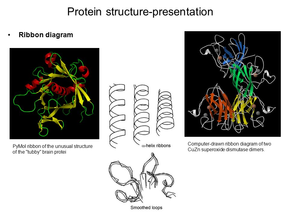 Drawn ribbon protein Ribbon structure download Protein 22