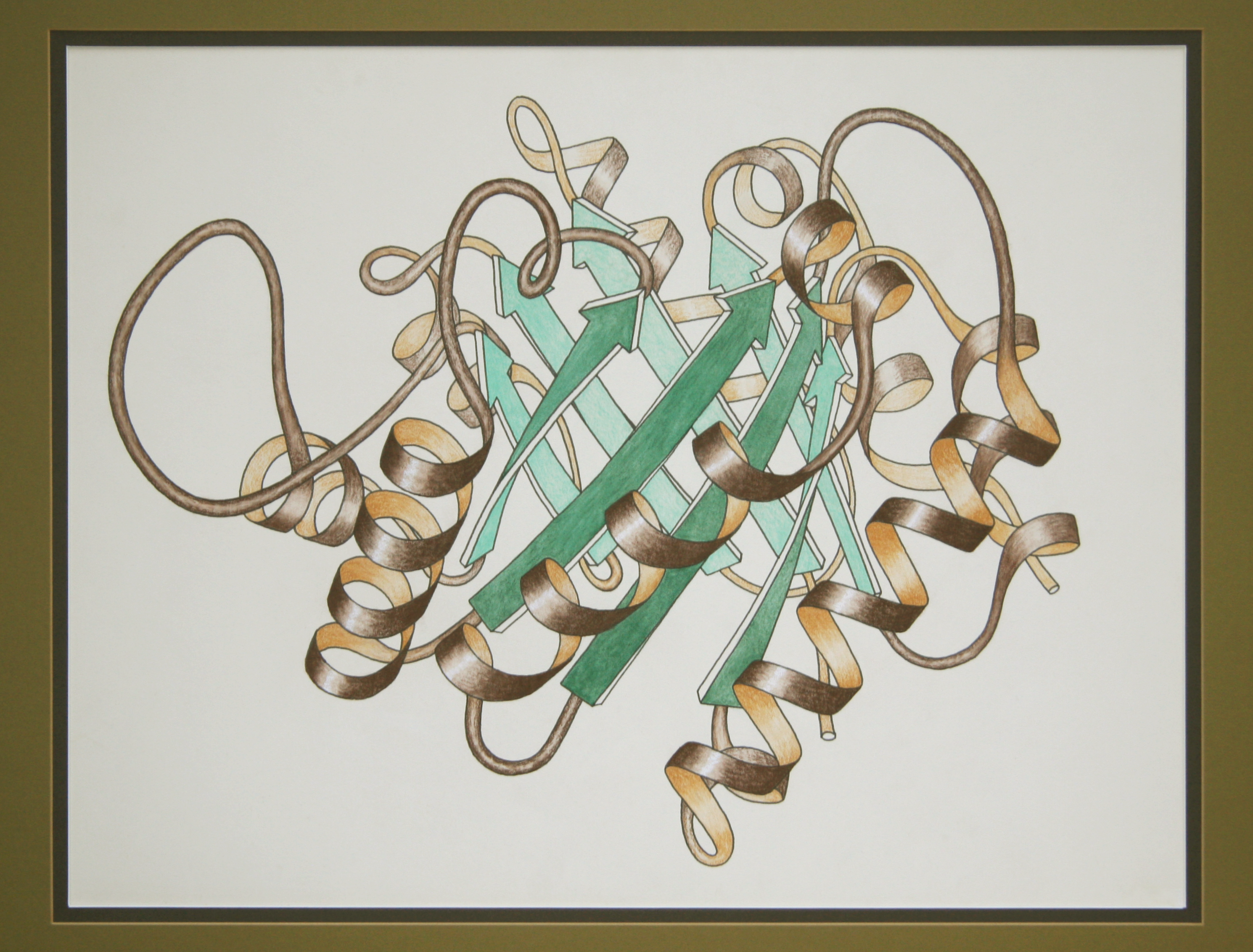 Drawn ribbon Of by triose (PDB: drawn
