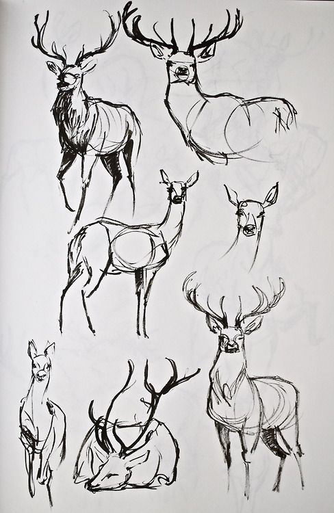 Drawn reindeer awesome Deer sketches 25+ Right the
