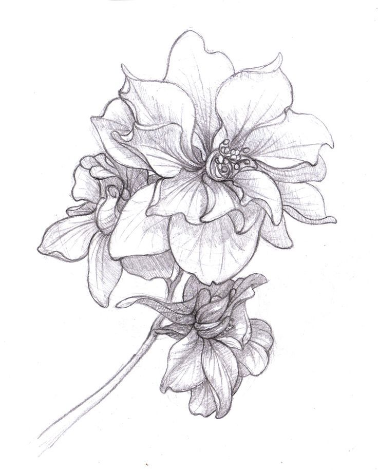 Drawn right to be born July best on Birth Larkspur