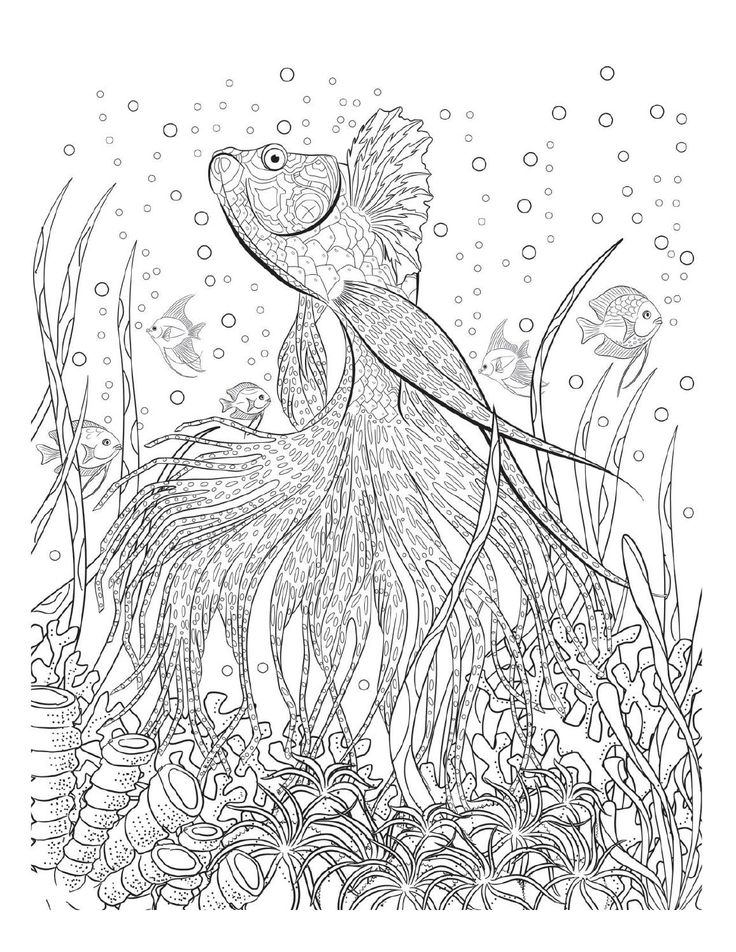 Drawn river coloring page Pages best Coloring Oceana Coloring