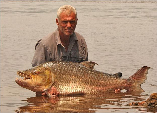Drawn river monster And sized best Jeremy Wade
